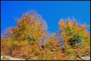 Autumn Colors @ Cetatuia