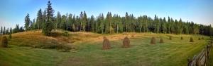 Late summer meadow near Scarisoara