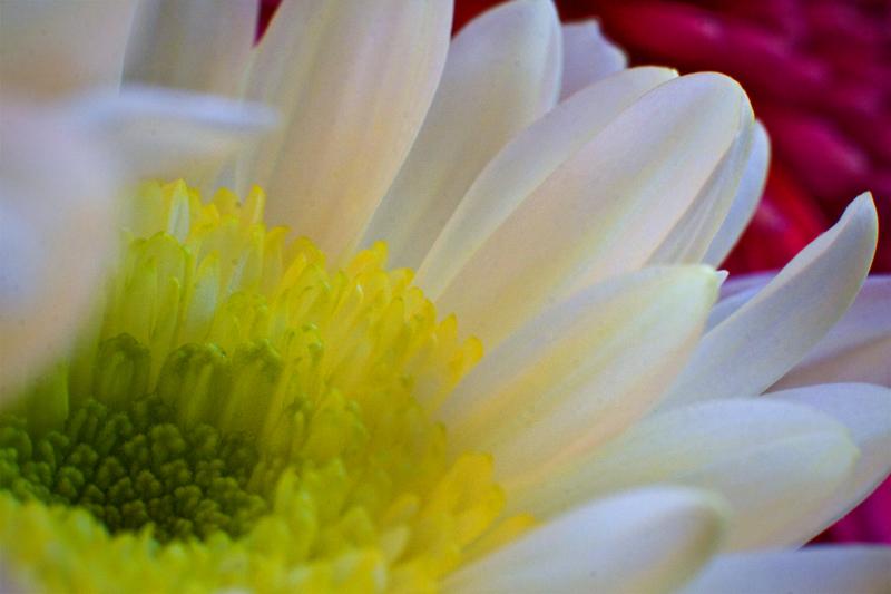 web-flower-portrait-macro-1