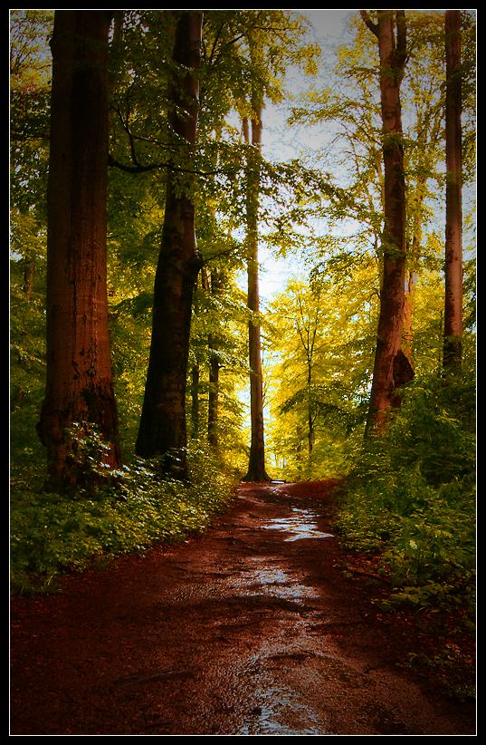 Sarmizegetusa - Path into