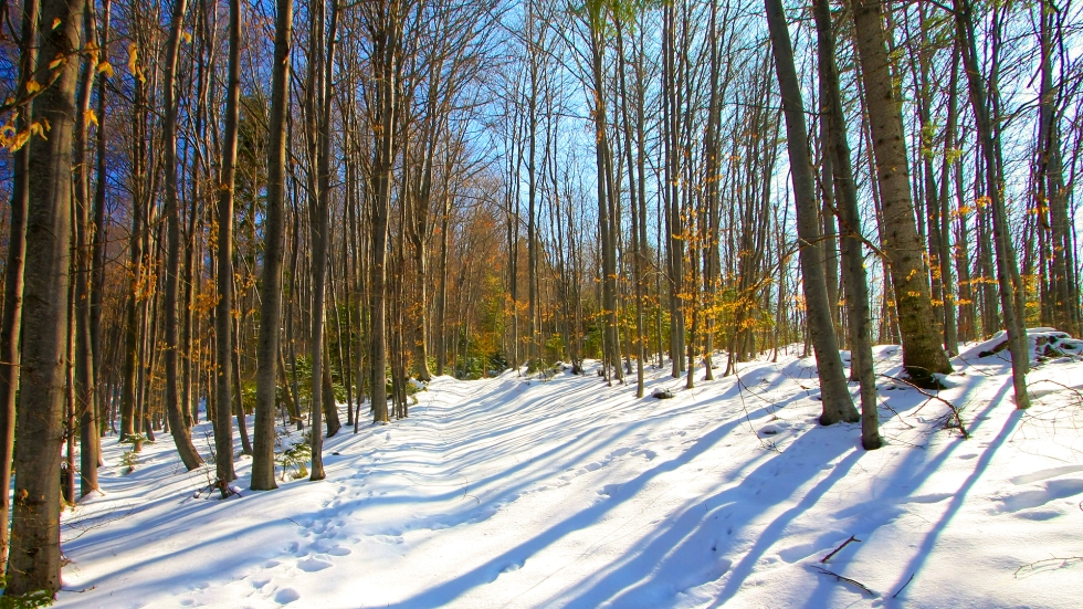 Forest Winterscape, HD