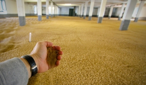 Malting floor at Laphroaig distillery
