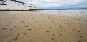 Beautiful beaches of Islay - what are these things??